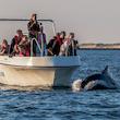 Delfinsafari i Limfjorden