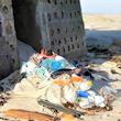 Beach Clean-up med Race for Oceans Stafetten & Plastindustrien & LETBEK A/S